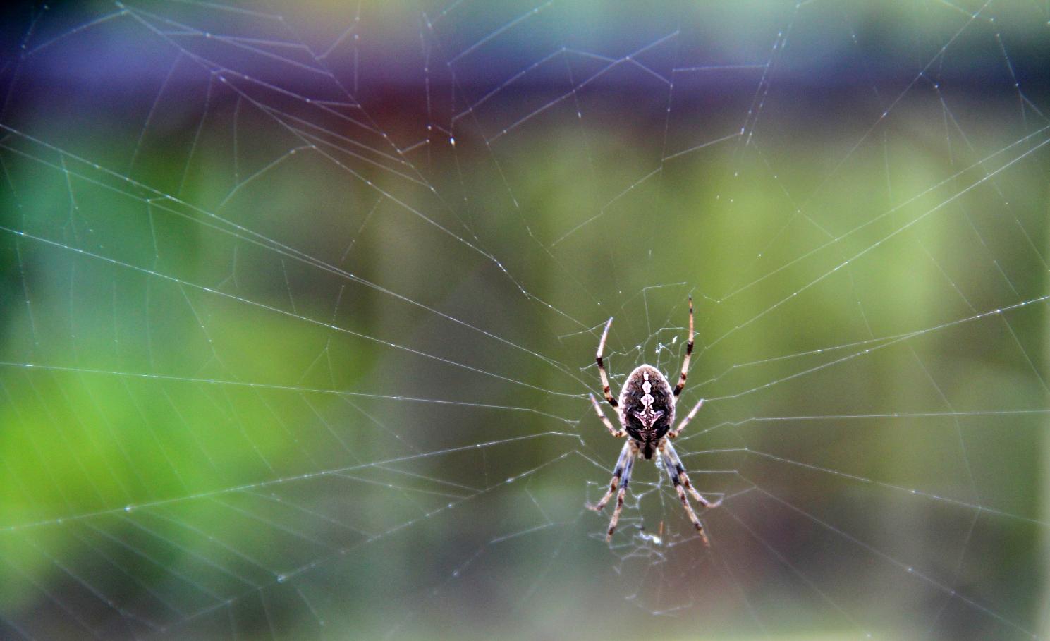spider rain aug 2013 - Copy