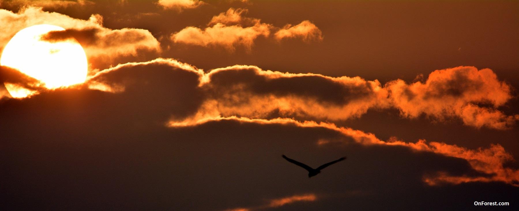 Flight Towards the Light