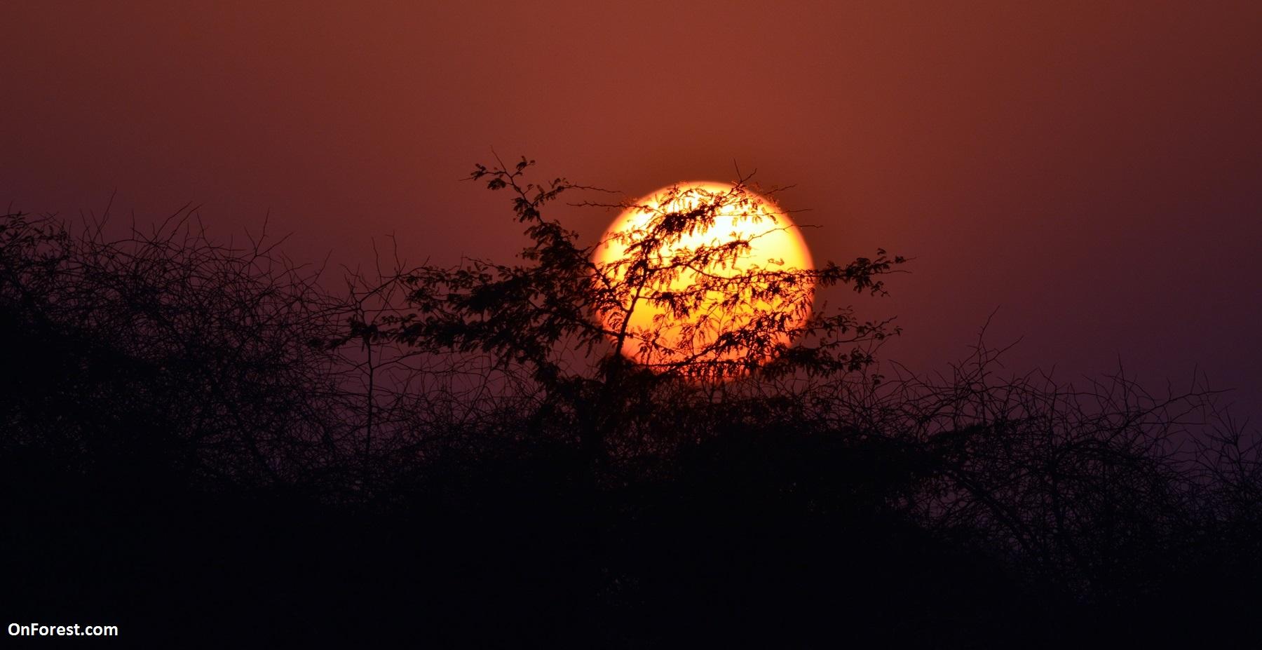 Sun Set on the Jungle