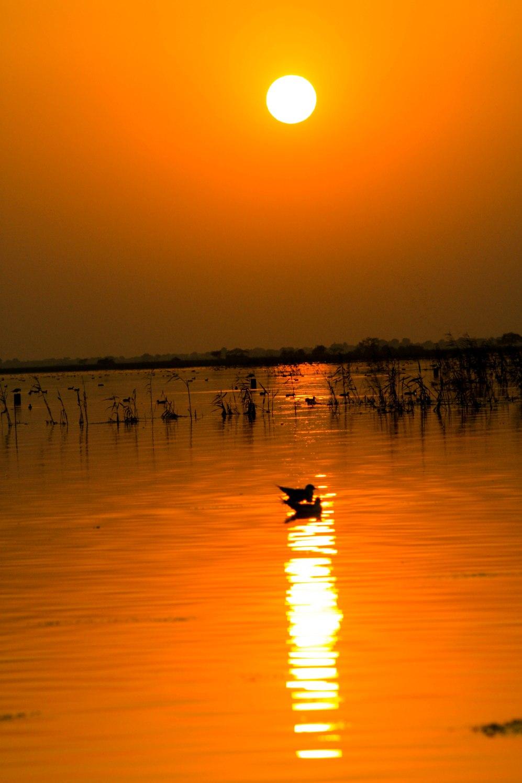 Sun_Set_Bird_Pair