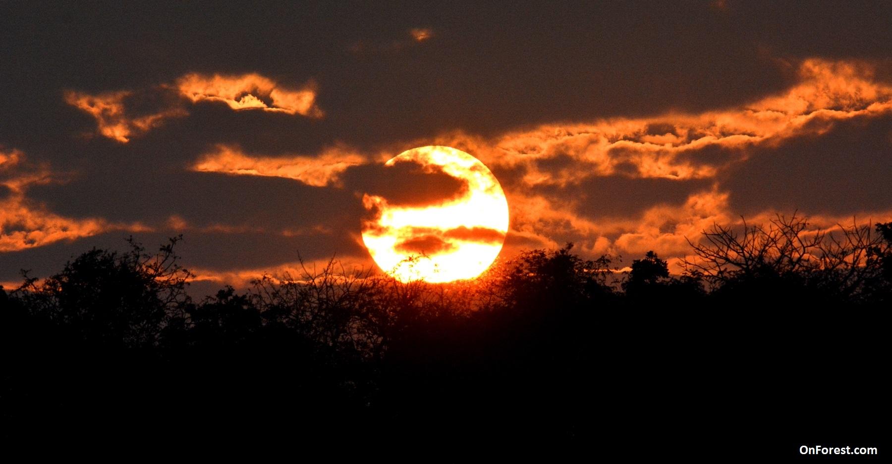 Sun Rise At Gir