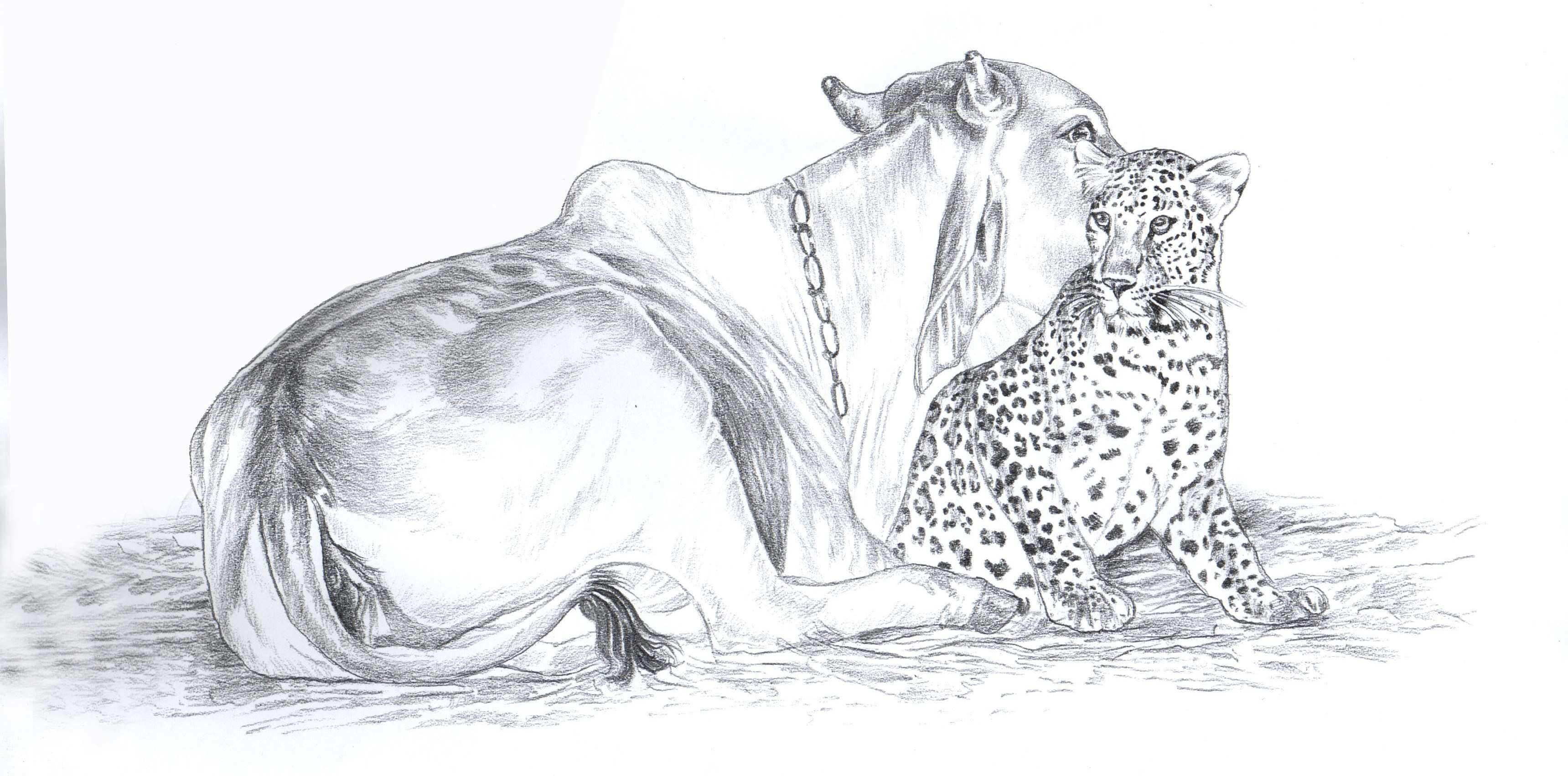 Leopard & Cow