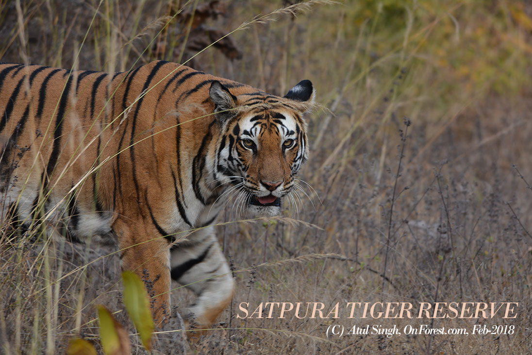 Satpura National Park-Madhai & Churna-Tiger's new Frontier-Visit & Review